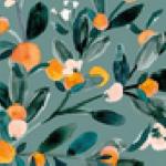 sorbet-clementine